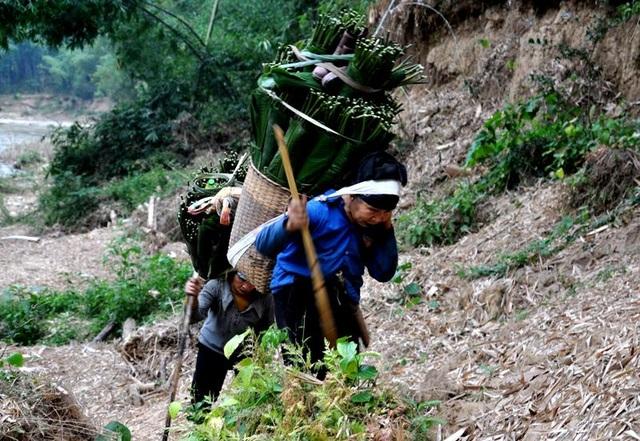 Thanh Hoá: Cận Tết, nhiều cụ bà gần 70 tuổi vẫn băng rừng, lội suối hái lá dong - 6
