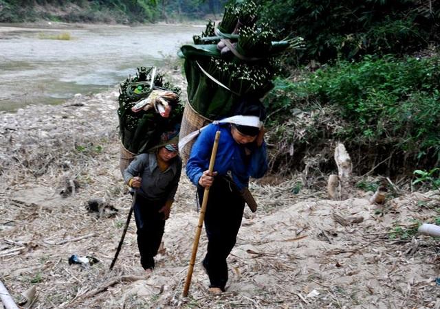 Thanh Hoá: Cận Tết, nhiều cụ bà gần 70 tuổi vẫn băng rừng, lội suối hái lá dong - 7