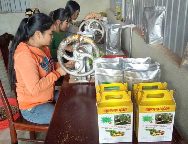 Macca cháy hàng dịp Tết tại Đắk Nông, lương nhân công tăng thêm 1,5 triệu đồng - 3