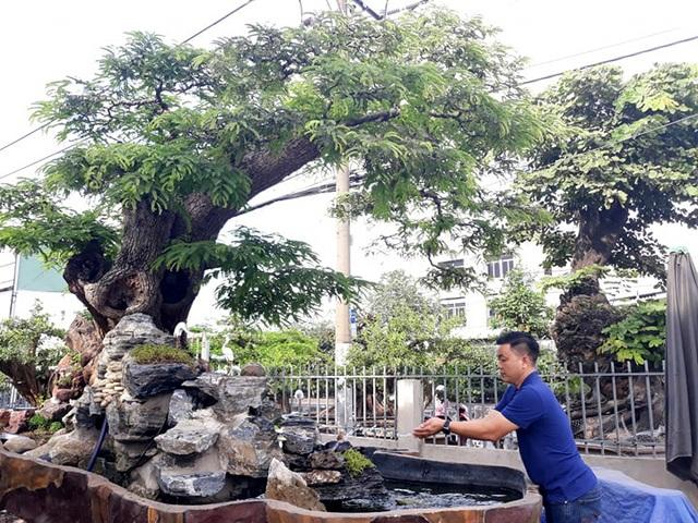 Độc đáo cây me trăm tuổi, được trả giá tiền tỷ tại Sài Gòn - 8