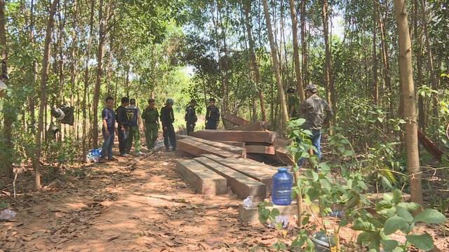 Để xảy ra phá rừng quy mô lớn, 4 cán bộ công ty lâm nghiệp bị bắt  - 1