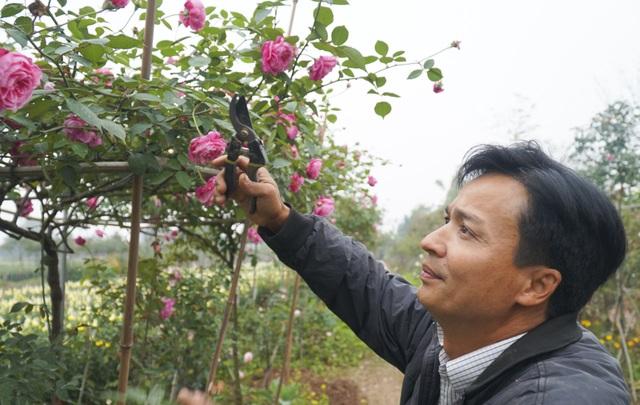 Chiêm ngưỡng gốc hồng cao tuổi giá 70 triệu đồng ở làng hoa Phù Vân - 8
