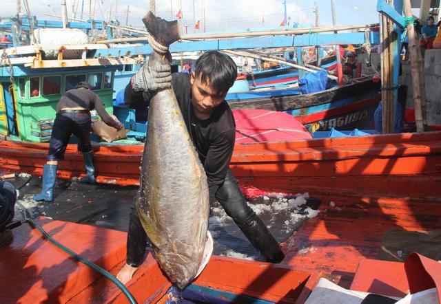 Phú Yên: Nhiều ngư dân lo mất Tết vì giá cá ngừ giảm mạnh - 2