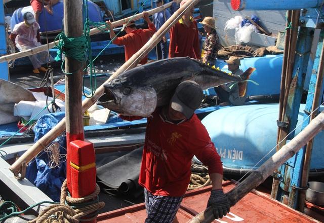 Phú Yên: Nhiều ngư dân lo mất Tết vì giá cá ngừ giảm mạnh - 3