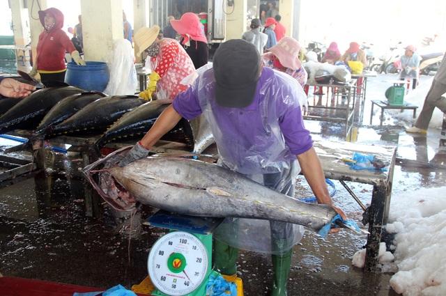 Phú Yên: Nhiều ngư dân lo mất Tết vì giá cá ngừ giảm mạnh - 4
