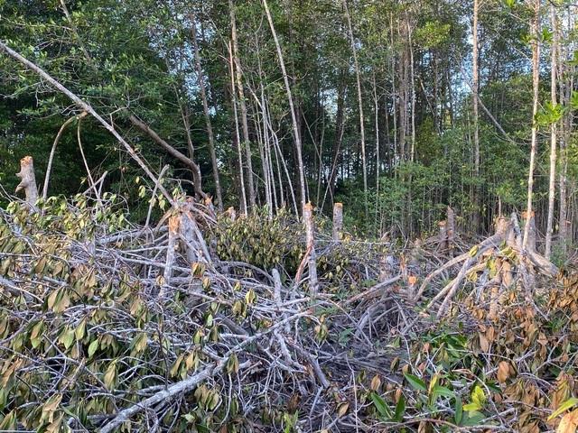 Sở Nông nghiệp nêu nguyên nhân cây rừng phòng hộ bị chặt phá - 1