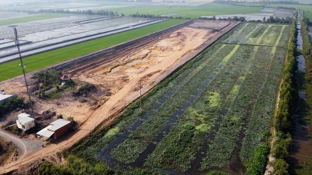 Ruộng lúa chết khô nghi do phèn từ hầm đất khai thác trái phép - 1