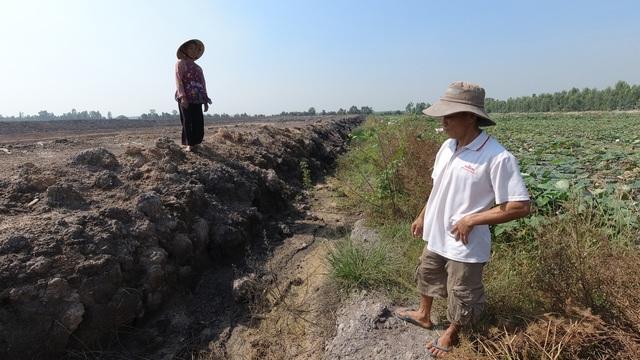Ruộng lúa chết khô nghi do phèn từ hầm đất khai thác trái phép - 2
