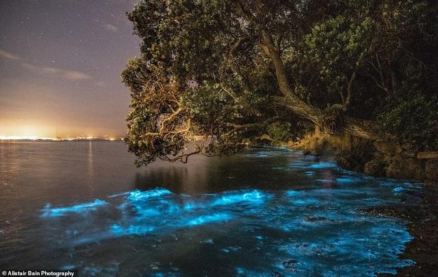 Kỳ thú ánh sáng mê hoặc của các sinh vật phù du trong nước - 1