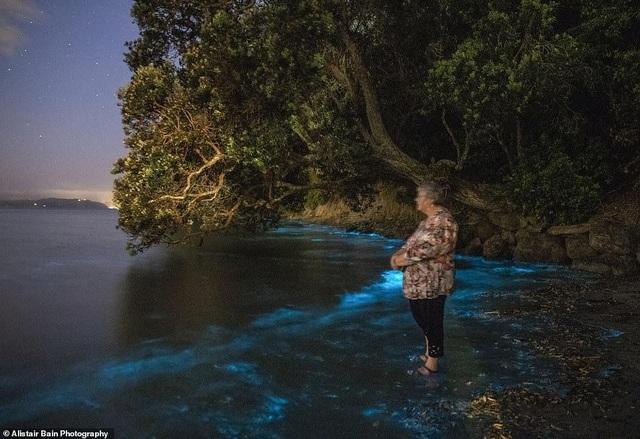 Kỳ thú ánh sáng mê hoặc của các sinh vật phù du trong nước - 3