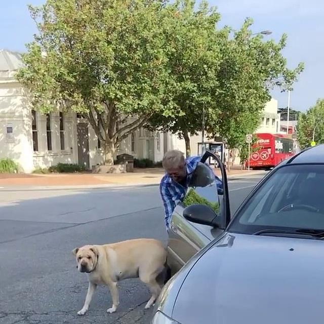 Chó bấm còi inh ỏi vì bị chủ bỏ quên trên xe ô tô - 2