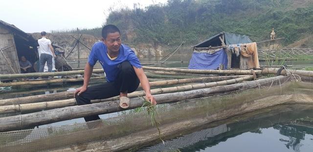 Nuôi cá rô phi khủng, Tết bắt lên bán giá gần 500 ngàn đồng/con - 1