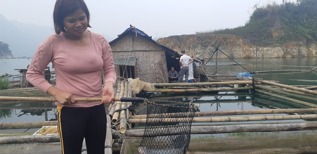 Nuôi cá rô phi khủng, Tết bắt lên bán giá gần 500 ngàn đồng/con - 2