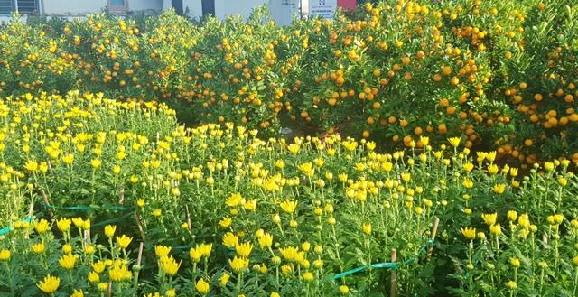 Ngàn hoa khoe sắc chờ đón Xuân - 1