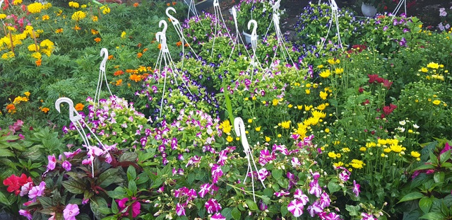 Ngàn hoa khoe sắc chờ đón Xuân - 11