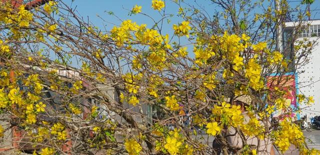 Ngàn hoa khoe sắc chờ đón Xuân - 4
