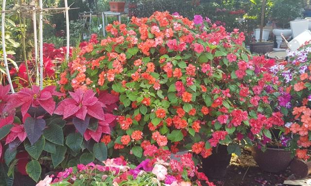 Ngàn hoa khoe sắc chờ đón Xuân - 12