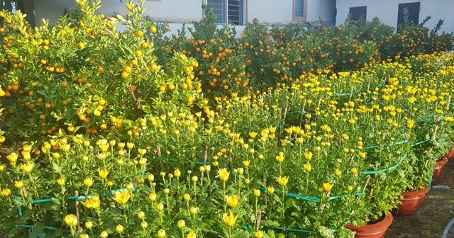 Ngàn hoa khoe sắc chờ đón Xuân - 3