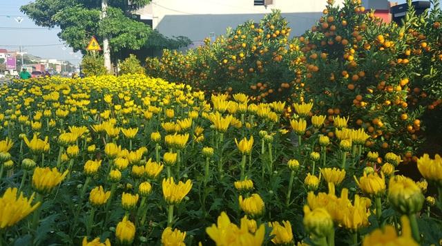 Ngàn hoa khoe sắc chờ đón Xuân - 7