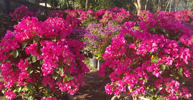 Ngàn hoa khoe sắc chờ đón Xuân - 2