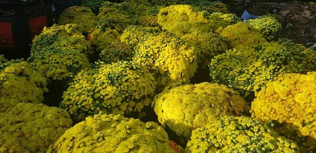 Ngàn hoa khoe sắc chờ đón Xuân - 6