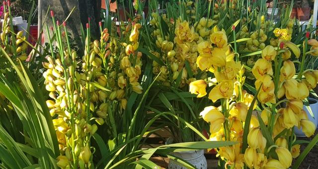 Ngàn hoa khoe sắc chờ đón Xuân - 8