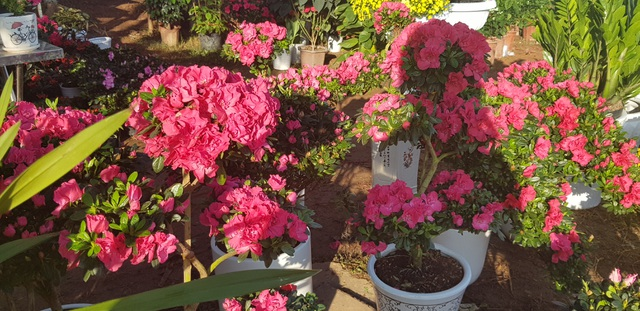 Ngàn hoa khoe sắc chờ đón Xuân - 9