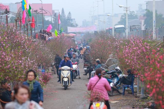Đào Nhật Tân bung nở nhuộm đỏ rực chợ hoa lớn nhất ở Hà Nội - 1