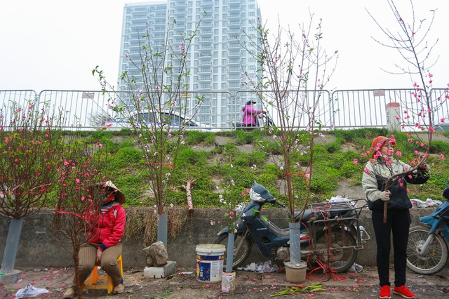 Đào Nhật Tân bung nở nhuộm đỏ rực chợ hoa lớn nhất ở Hà Nội - 2