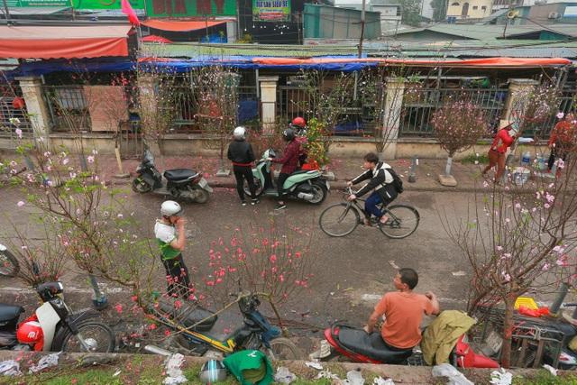 Đào Nhật Tân bung nở nhuộm đỏ rực chợ hoa lớn nhất ở Hà Nội - 3