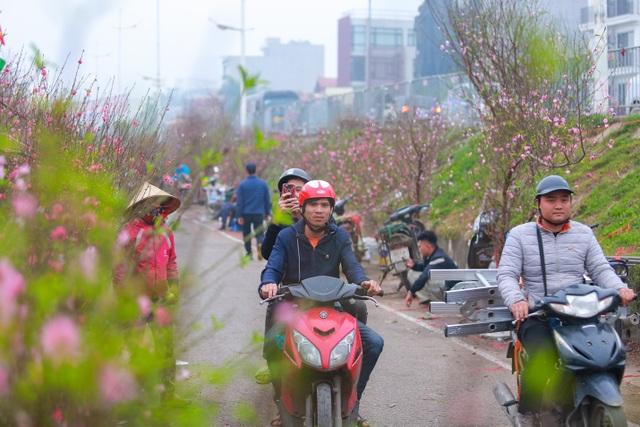 Đào Nhật Tân bung nở nhuộm đỏ rực chợ hoa lớn nhất ở Hà Nội - 6