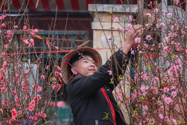 Đào Nhật Tân bung nở nhuộm đỏ rực chợ hoa lớn nhất ở Hà Nội - 8