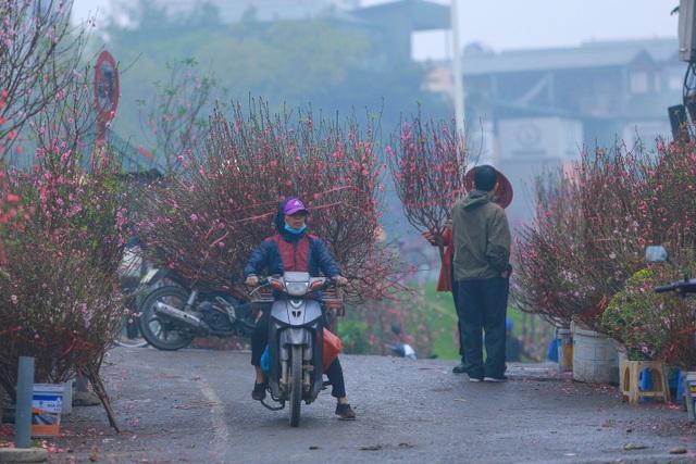 Đào Nhật Tân bung nở nhuộm đỏ rực chợ hoa lớn nhất ở Hà Nội - 10