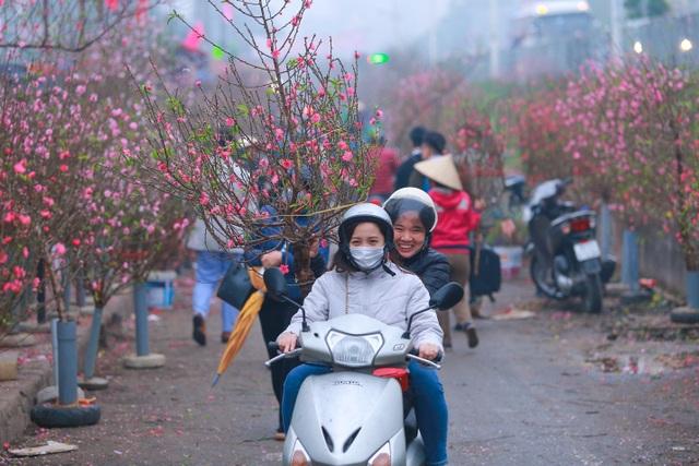 Đào Nhật Tân bung nở nhuộm đỏ rực chợ hoa lớn nhất ở Hà Nội - 12