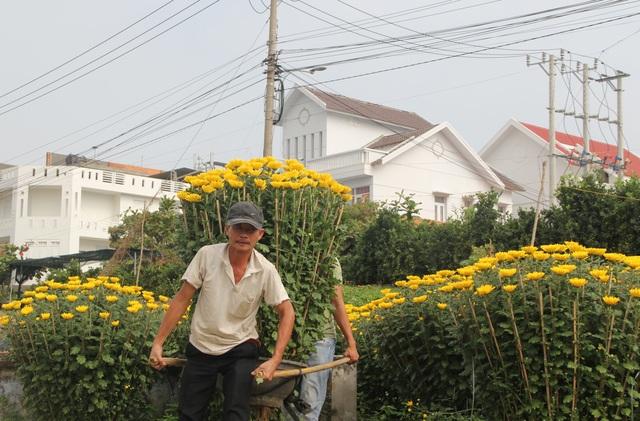 Cận Tết: Vựa hoa cúc đại đóa lớn nhất Phú Yên nhộn nhịp xuất hàng - 7