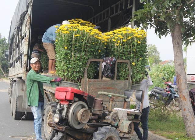 Cận Tết: Vựa hoa cúc đại đóa lớn nhất Phú Yên nhộn nhịp xuất hàng - 9