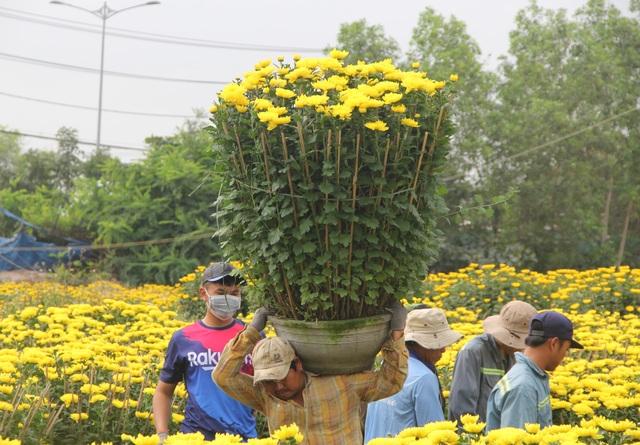 Cận Tết: Vựa hoa cúc đại đóa lớn nhất Phú Yên nhộn nhịp xuất hàng - 5