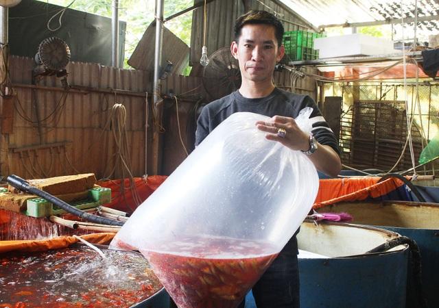 Cá chép cúng ông Công ông Táo: Hàng về nhiều, giá giảm nhẹ - 5