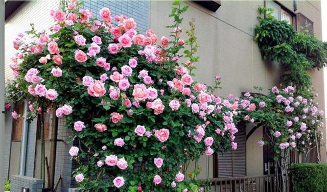 """Ngỡ ngàng với những ban công đầy hoa và cây xanh khiến bạn """"ngắm mãi không chán"""" - 1"""