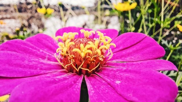 Thiên nhiên đẹp độc lạ qua góc nhìn của camera macro - 1