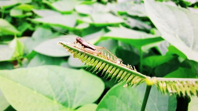 Thiên nhiên đẹp độc lạ qua góc nhìn của camera macro - 4