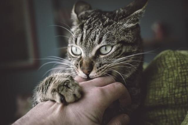 Phát hiện gây sốc: Mèo đột nhập cơ sở nghiên cứu ăn xác người hiến tặng - 1