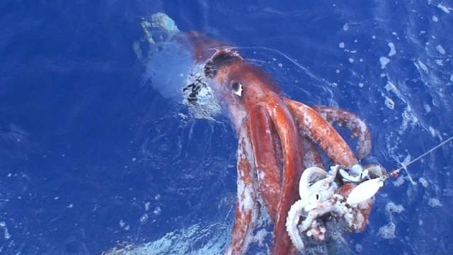 Lập bản đồ gene của một trong những sinh vật biển sâu khó nắm bắt nhất trên Trái đất - 1