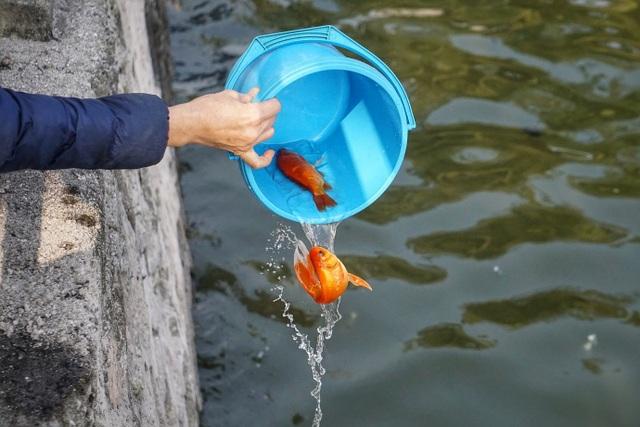 Người Hà Nội văn minh mang xô chậu đi thả cá chép, không thả túi nilon - 8