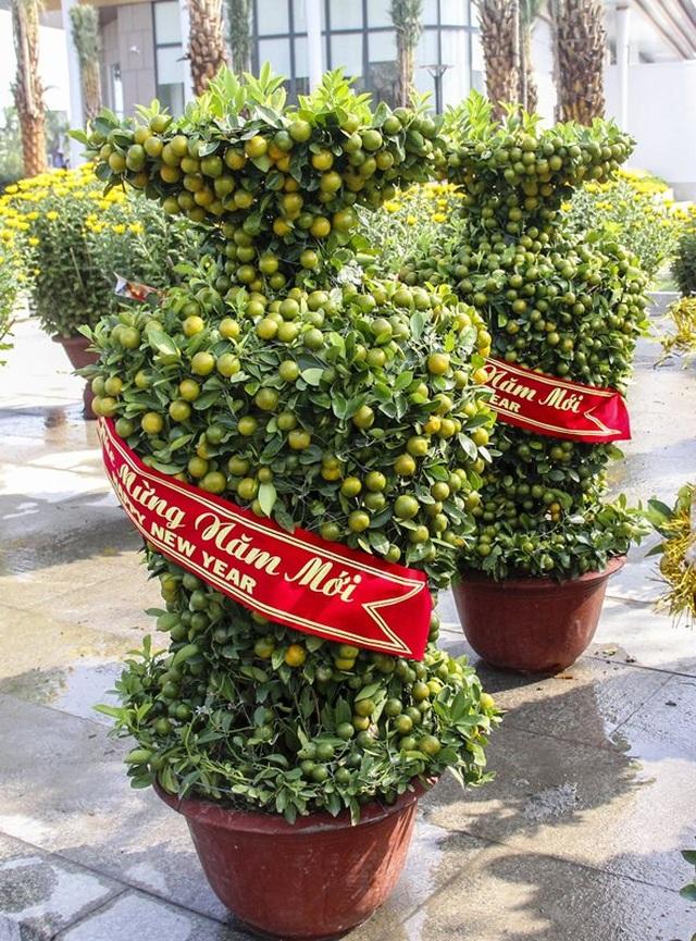 Độc đáo quất bonsai hình chuột, quả chi chít ở chợ Tết - 5