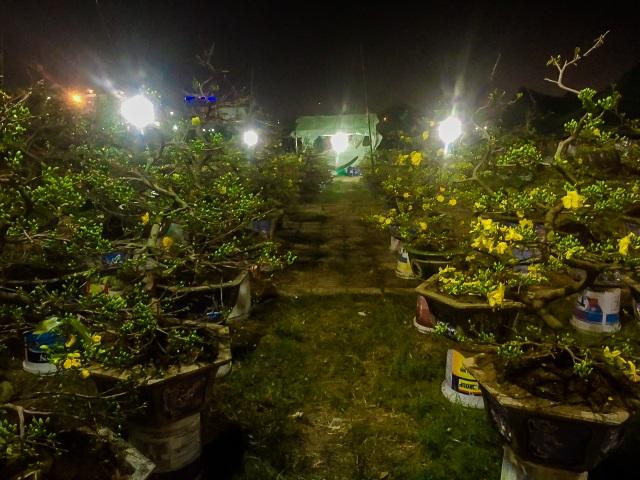Trắng đêm trông cây ở chợ hoa Tết - 1
