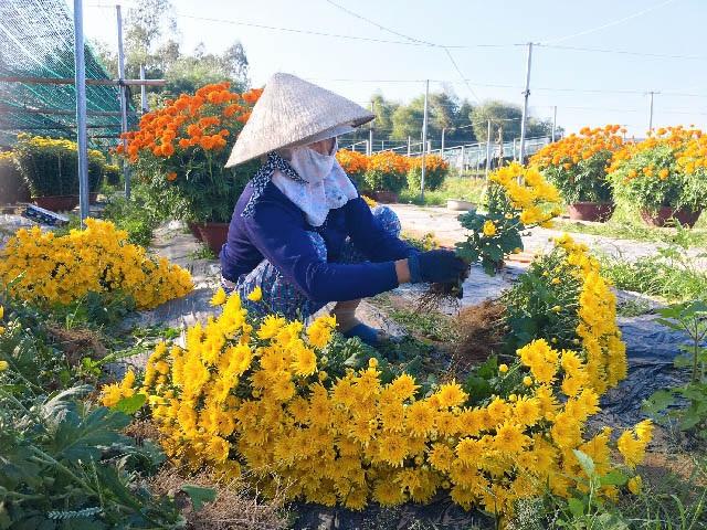 Đà Nẵng: Làng Nhơn Thọ ăn Tết to do bán hoa đắt hàng - 1