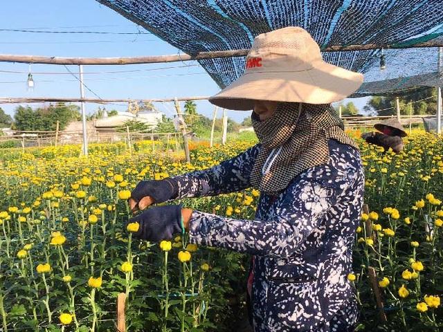 Đà Nẵng: Làng Nhơn Thọ ăn Tết to do bán hoa đắt hàng - 2