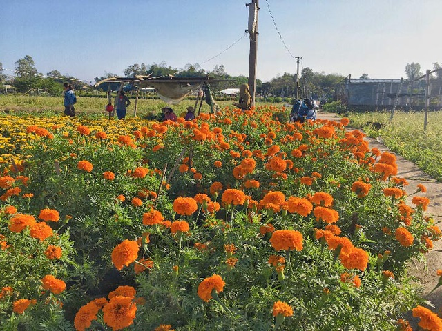 Đà Nẵng: Làng Nhơn Thọ ăn Tết to do bán hoa đắt hàng - 3
