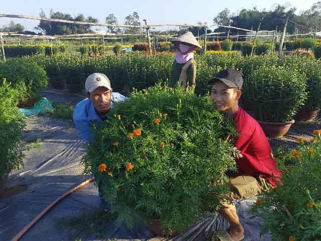 Đà Nẵng: Làng Nhơn Thọ ăn Tết to do bán hoa đắt hàng - 6